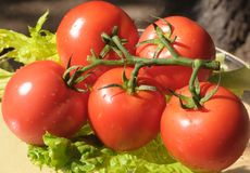 Tomates con las gotas de lluvia 3 Foto de archivo