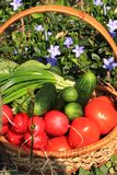 Tomates, concombres et oignons juteux dans un panier dans le jardin entouré par des fleurs de ressort avec le plan rapproché de b photo stock
