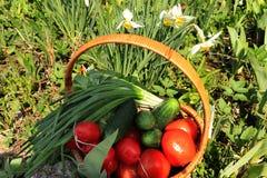 Tomates, concombres et oignons juteux dans un panier dans le jardin entour? par des fleurs de ressort avec le plan rapproch? de b photographie stock