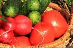 Tomates, concombres et radis juteux dans un panier dans le jardin entouré par des fleurs de ressort avec le plan rapproché de bai photos libres de droits
