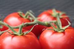 Tomates conectados Fotos de Stock