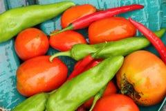 Tomates cultivados em casa & pimentas Fotos de Stock