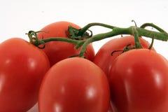 Tomates délicieuses Photographie stock libre de droits