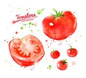 Tomates da aquarela
