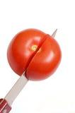 Tomates da estaca imagem de stock
