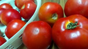 Tomates da exploração agrícola Fotos de Stock