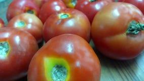 Tomates da exploração agrícola Imagens de Stock Royalty Free