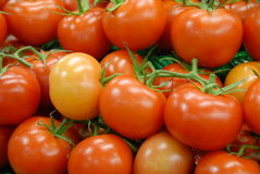 Tomates da videira Fotos de Stock Royalty Free