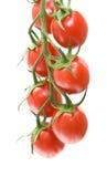 Tomates da videira Foto de Stock Royalty Free