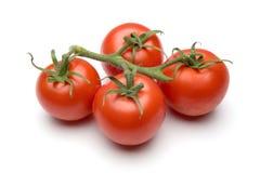 Tomates da videira isolados no branco Imagens de Stock Royalty Free