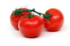 Tomates da videira isolados no branco Fotografia de Stock Royalty Free