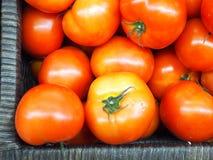 Tomates dans le panier Photo stock