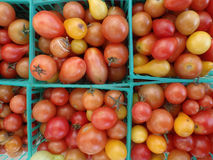 Tomates dans les paniers bleus en plastique carrés photo libre de droits