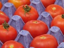 Tomates dans un bac. Image stock