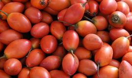 Tomates de árbol Imágenes de archivo libres de regalías