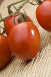 Tomates de ameixa amadurecidos videira Imagens de Stock