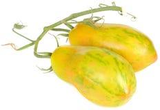 Tomates de ameixa amarelos com listras verdes Imagens de Stock