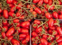 Tomates de ameixa italianos Fotos de Stock