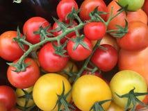 Tomates de bébé Image stock