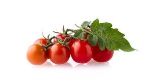 Tomates de branche d'isolement sur un fond blanc Photos stock
