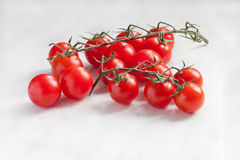 Tomates de branche sur un fond Photo stock
