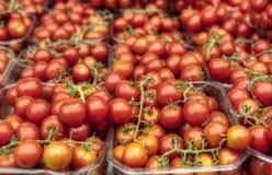 Tomates de cereja fotos de stock