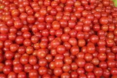 Tomates de cereja Imagem de Stock Royalty Free
