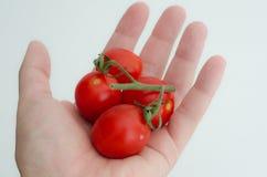 Tomates de cereja Foto de Stock