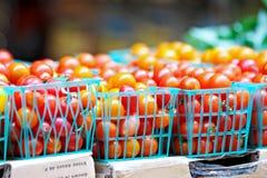 Tomates de cereja coloridos Imagens de Stock Royalty Free