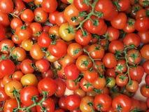 Tomates de cereja com hastes Imagem de Stock Royalty Free