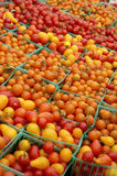 Tomates de cereja da cesta Foto de Stock Royalty Free