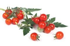 Tomates de cereja maduros frescos isolados em um branco Fotografia de Stock Royalty Free