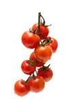 Tomates de cereja maduros no fundo branco imagem de stock royalty free