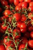 Tomates de cereja na videira Fotos de Stock Royalty Free