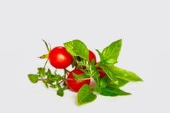 Tomates de cereja pequenos em um ramo verde imagens de stock royalty free