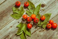 Tomates de cereja pequenos na tabela de madeira Fotografia de Stock