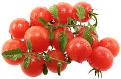 Tomates de cereza. Fotografía de archivo