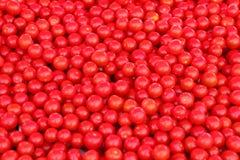 Tomates de cereza Fotos de archivo