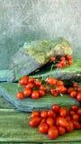 Tomates de cereza 2 Fotos de archivo libres de regalías
