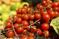 Tomates de cereza de la vid Imagenes de archivo