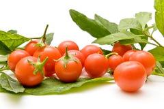 Tomates de cereza del primer Fotografía de archivo libre de regalías