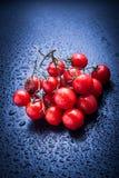 Tomates de cereza en azul imagen de archivo libre de regalías