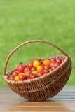 Tomates de cereza en cesta. Imagen de archivo