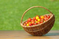 Tomates de cereza en cesta. Imagen de archivo libre de regalías