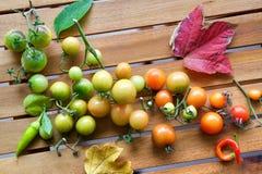 Tomates de cereza en colores de la pendiente Imagen de archivo libre de regalías