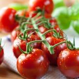 Tomates de cereza en la vid Imagen de archivo