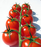 Tomates de cereza en la vid fotografía de archivo