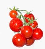 Tomates de cereza en una ramificación en las gotitas de agua Imágenes de archivo libres de regalías