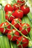 Tomates de cereza en vid Fotografía de archivo libre de regalías