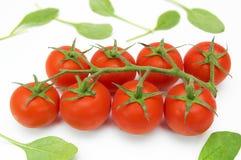 Tomates de cereza en vid Imagen de archivo libre de regalías